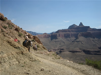 Mule Convoy on South Kaibab Trail